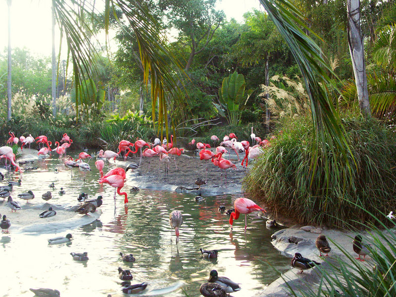 Flamingoes at the San Diego Zoo