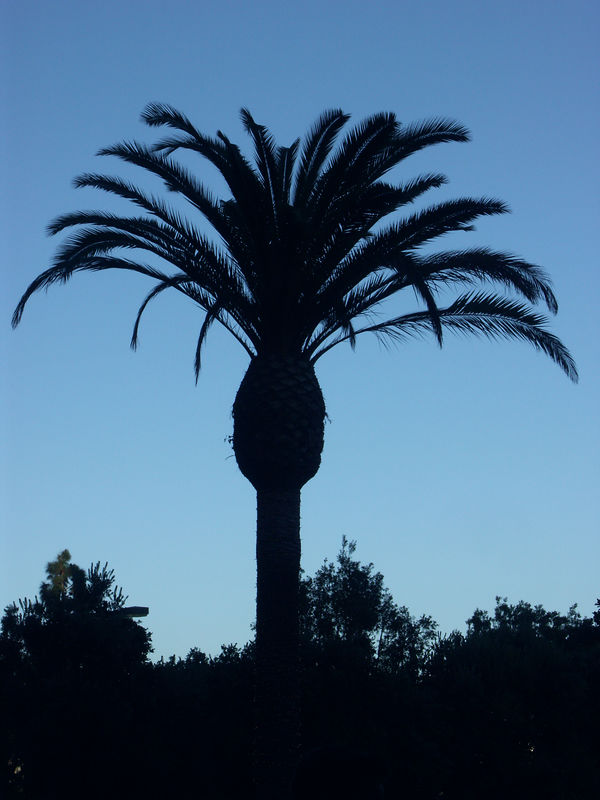 Palm tree at the hotel.