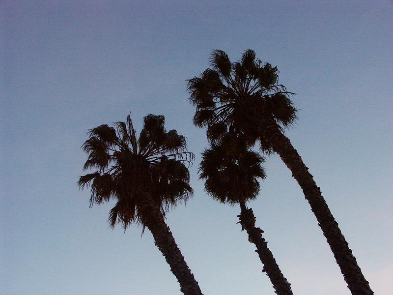San Diego Zoo palm trees