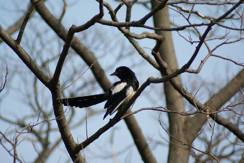 A bird.