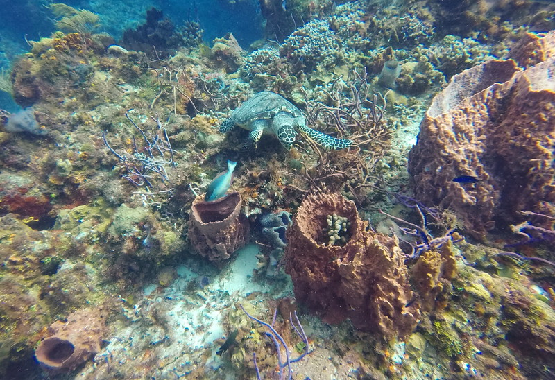 Dive in Cozumel