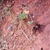 Tarantula on trail in Zion<br /> (Photo:  Lisa)