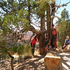 9/12 - funky tree at Bryce - Jenny, me and Lisa