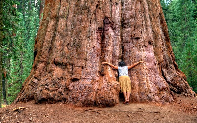 Seqoia National Park 2012