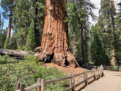 Base of the robert E Lee tree