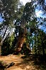 The Resurrection Tree