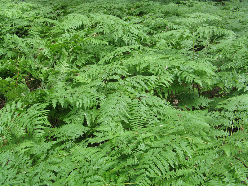 More lush ferns under the trees.