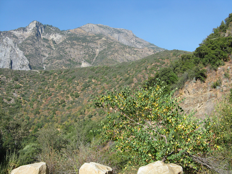 Looking up from the Kings canyon.