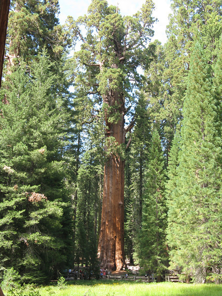 Gen. Sherman Tree is the largest living tree on Earth.