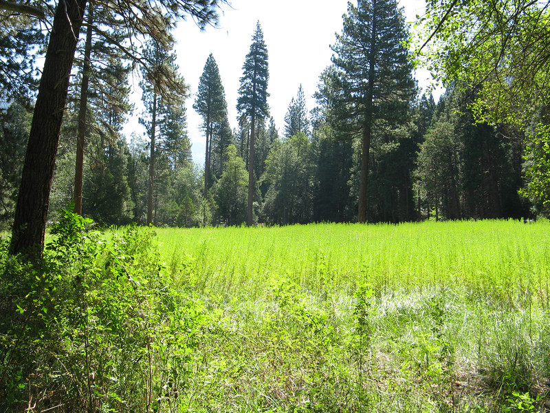 Small meadow near the river and campground.