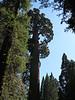 Grant Tree.