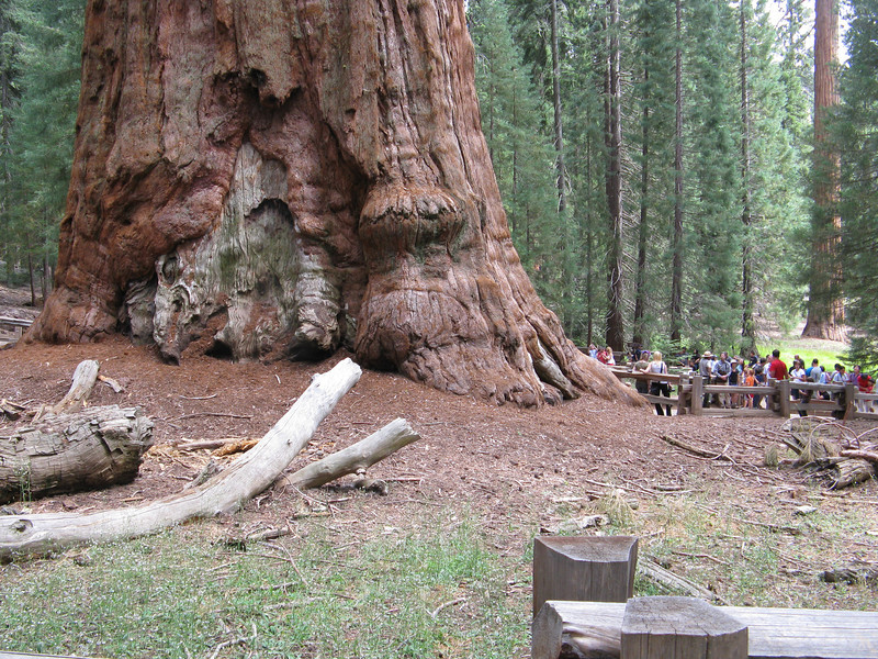 You can get a sense of the massive scale of the trunk by seeing all of the people next to it.