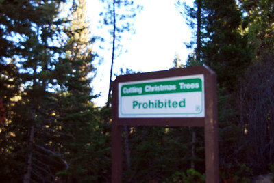 2012 Sequoia National Forest November 2012
