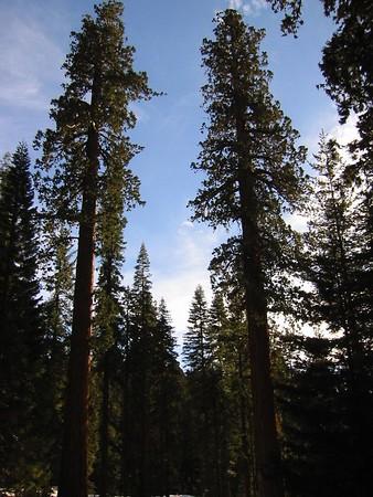 Sequoia National Park 2001