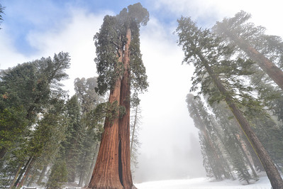 Beautiful Sequoia's, this place was amazing.