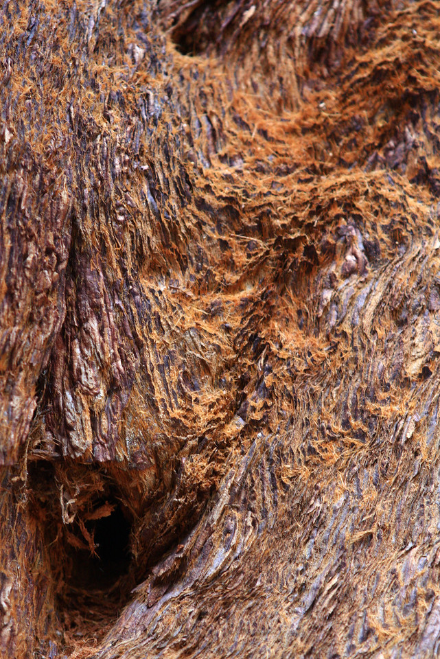 Sequoia tree bark patterns up close.