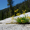 "<span id=""title"">Wildflowers</span> Gotta love flowers that seem to grow right out of the rock. I laid down to get this shot."