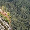 Wildflowers on Moro Rock