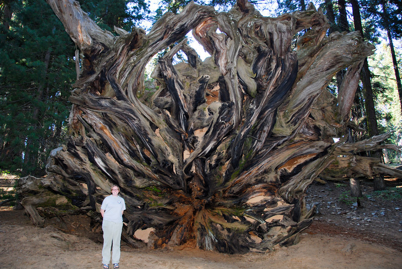 Roots<br /> My wife standing under the roots of the Buttress Tree. I was happy I had a reason to use my flash unit for this shot.