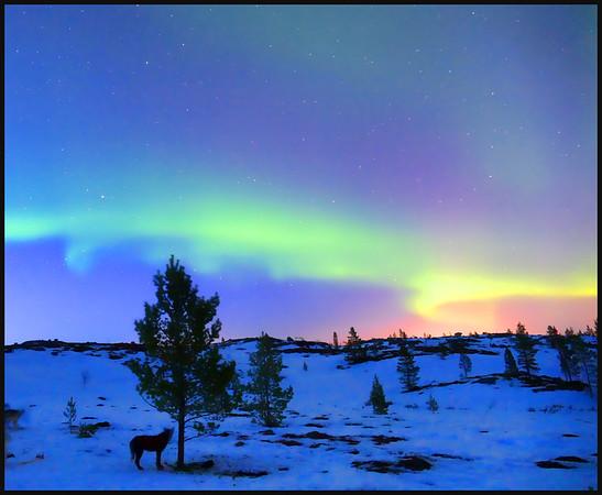 Seven Nights in Norway