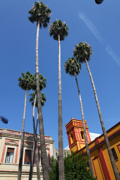 Holy cow!!  These palmtrees must be growing in Turbo mode!!