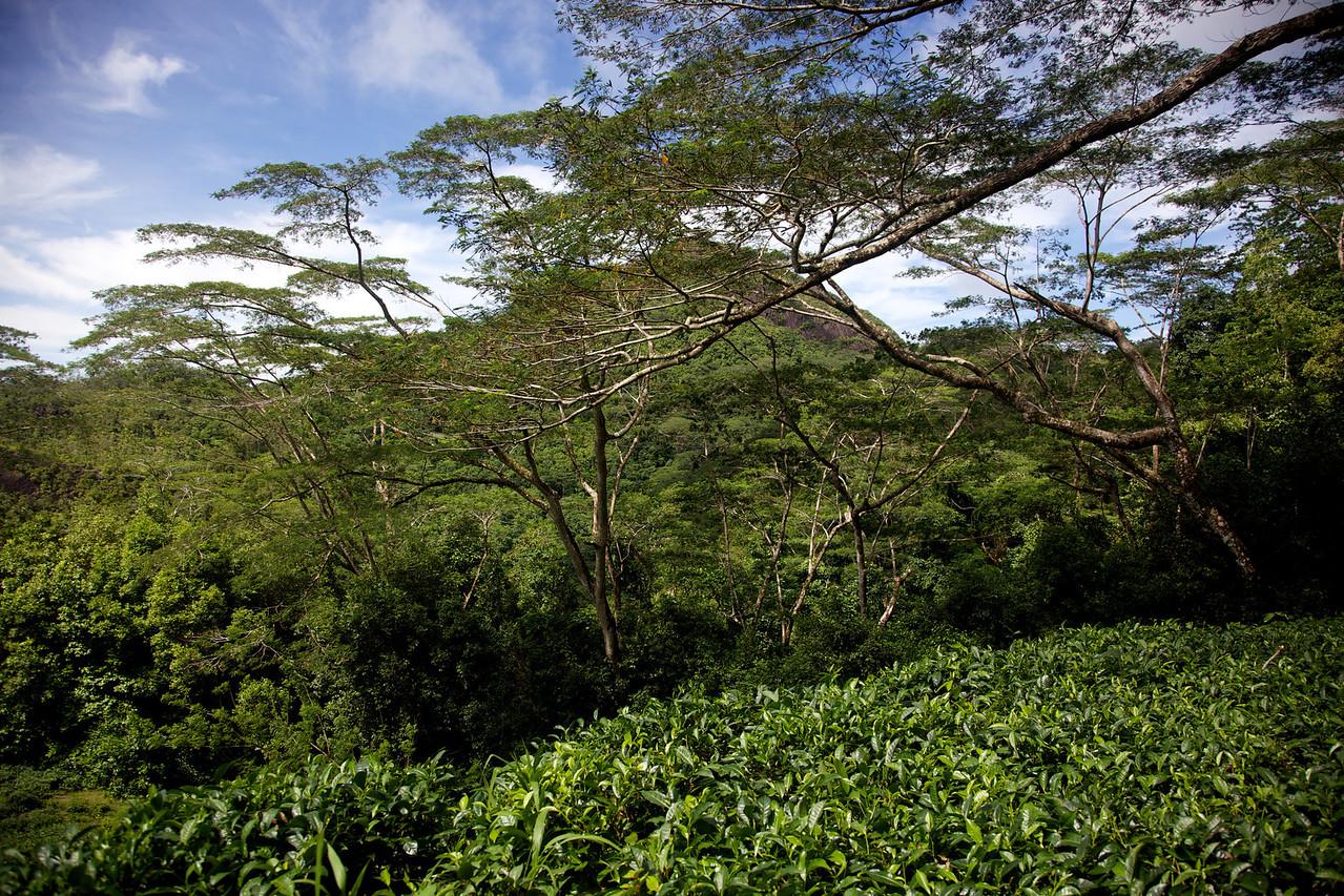 Driving through Morne Seychelles National Park