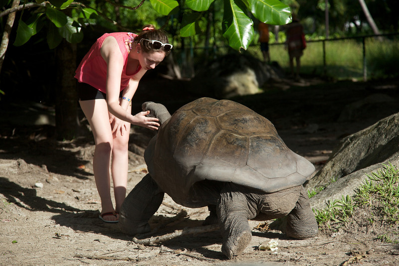 Giant Tortoises are indigenous to the Seychelles - they can live over 100 years and weigh over 500 pounds