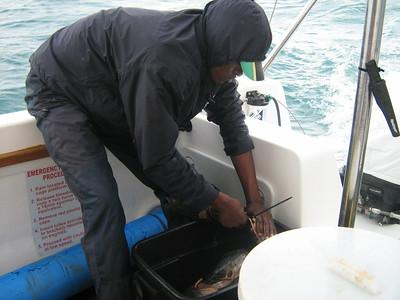 Shark Caging Gans Bai 2008