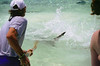 Feeding hungry sharks