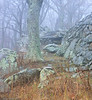 This is one of the overlooks along Skyline Drive. I couldn't help but pull over as the thick fog and dense forest captivated me.  It was worth the stop. The next picture is what I saw as I walked through the fog.