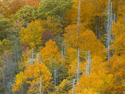 Hemlock Gorge