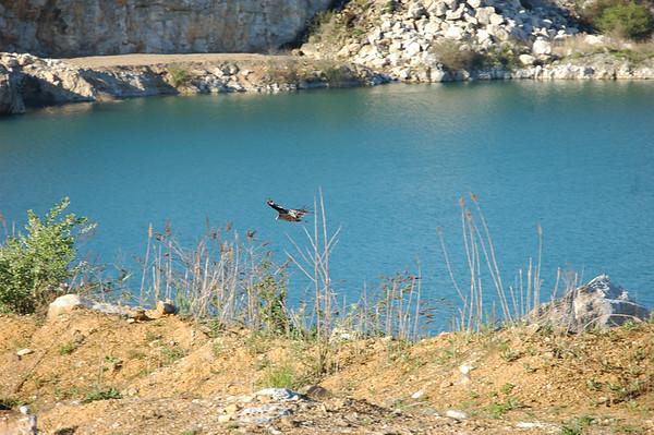 Shore  & Hawks In Great Valley