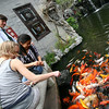 Feeding the goldfish at the Qinghui Gardens.