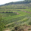 Near Mt. Etna - these are some of the vineyards at the Barone di Villagrande winery.