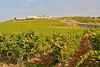 La Planeta winery's inn....La Foresteria near Menfi