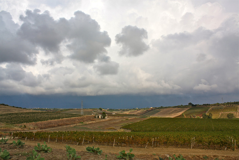 Storm over the vineyards