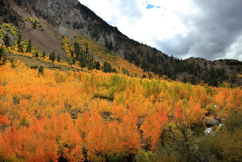 South Lake roadside beauty