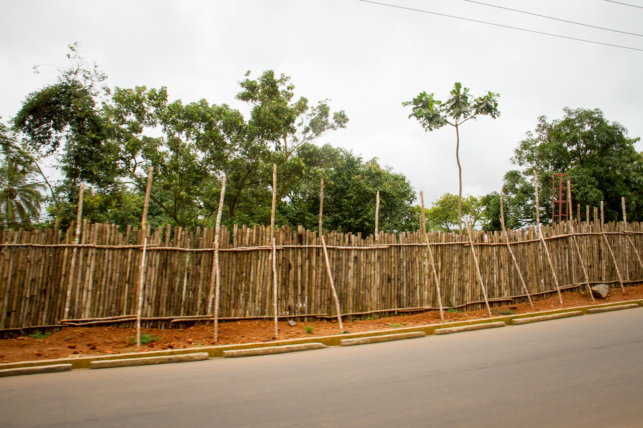 A wall of bamboo held up by bamboo scaffolding.