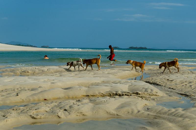 Dogs of No.2 beach.