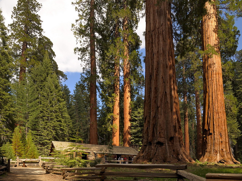 Sequoias and Museum, Mariposa Grove