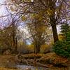 The Stream In Fall
