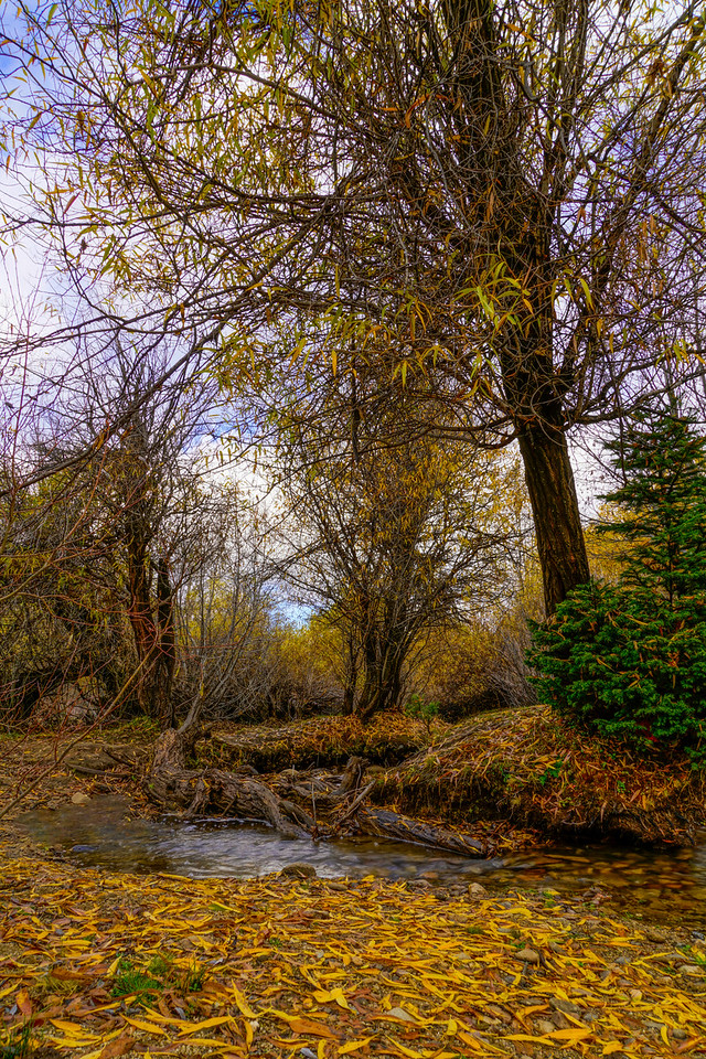 forest stream in fall