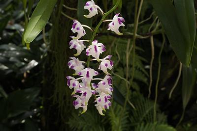 Singapore - 2 Botanical Gardens