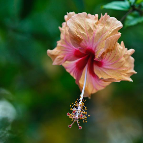 botanic garden IV, favoritt