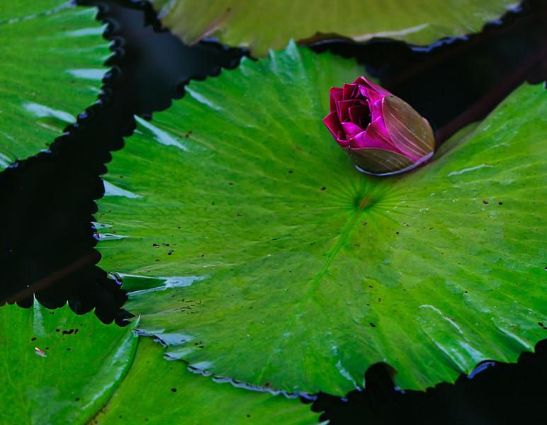 botanic garden III