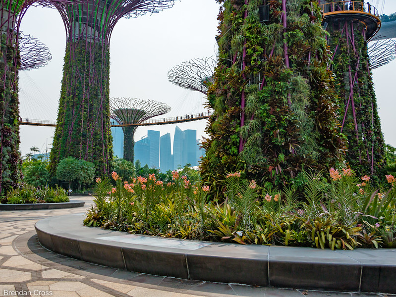 The Gardens by the Bay are right behind the Marina Bay Sands. It feels like a park from the future - with these massive tree like structures that are covered with different types of flora and the pedestrian bridges connecting them. Very cool.