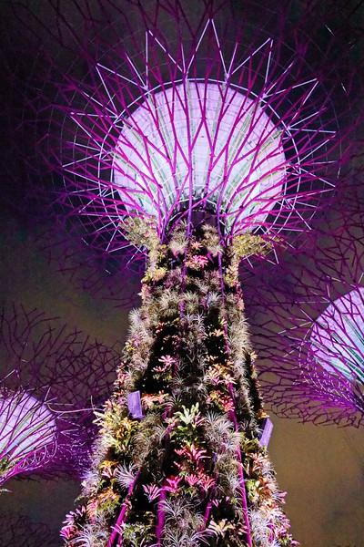 Singapore_076_20190405-193845
