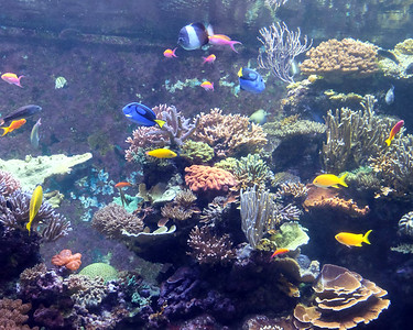 Aquarium 04