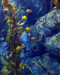 Aquarium 05