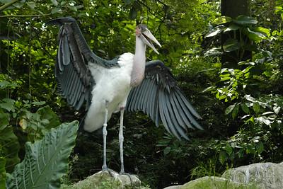 Singapore Bird Park. Singapore. June' 2004.